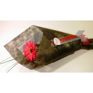 Single Stem Gerbera Gift Wrapped